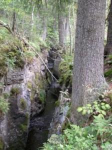Vannet fra Grytjerna fulgte bekkeleiet nedtil Åsen hvor det ble anlagt ei ny renne - Hølafloa