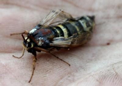 Vakkert insekt - vakkert navn!